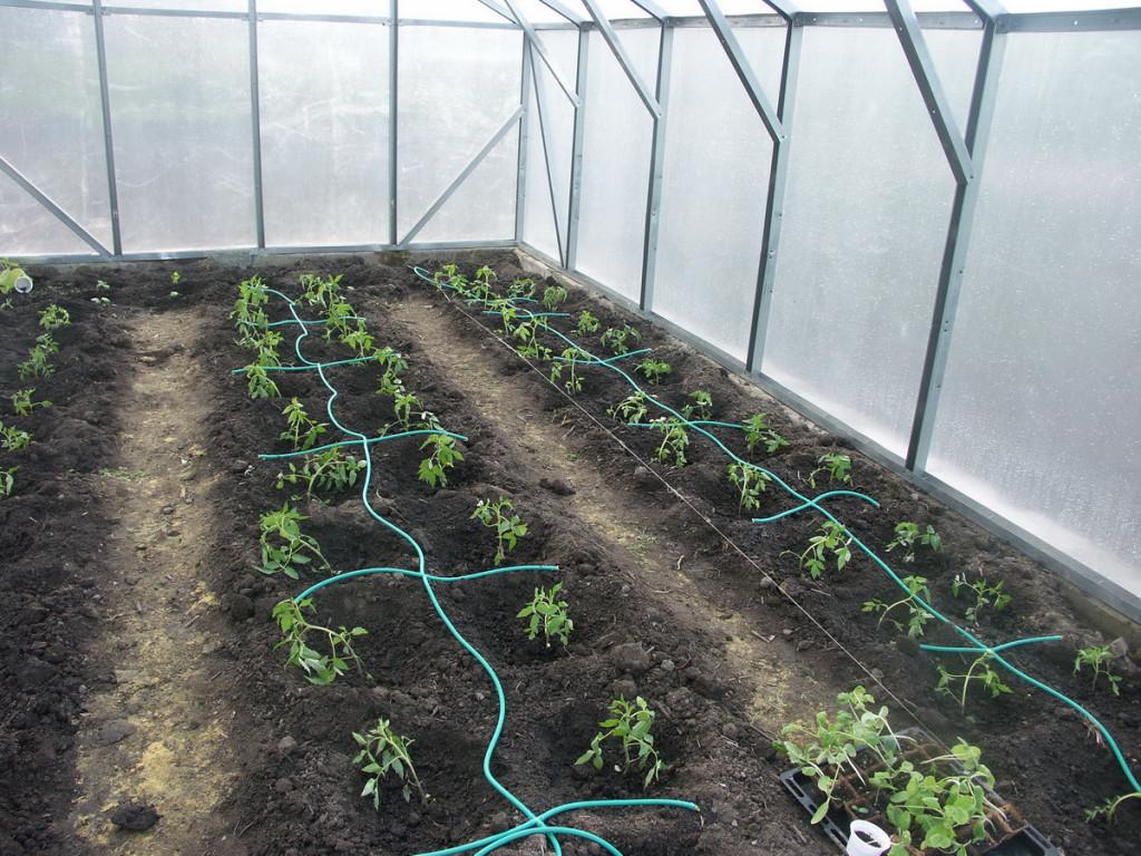 Автоматический полив в теплице и огороде