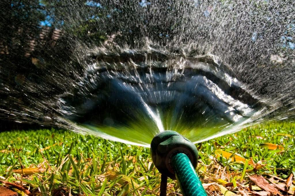 Правильный полив растений в жару